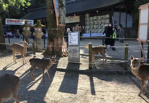 新年の奈良公園
